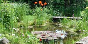 Piscine naturelle et cologique jardin aquatique tang for Piscine issoire jardin aquatique